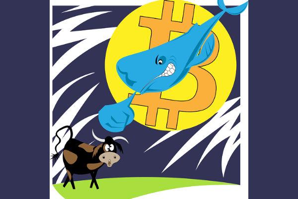 また出たビットコインクジラ!数分間に25,000BTCで1000万ドル荒稼ぎ