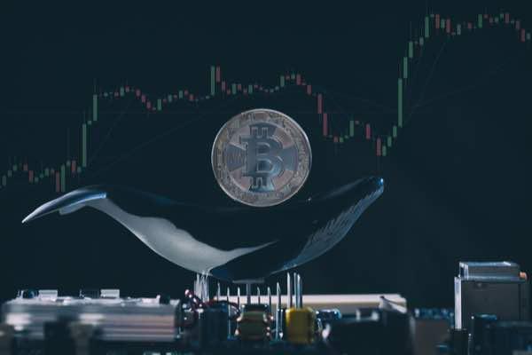 直近のビットコイン下落時に大口投資家は押し目買い